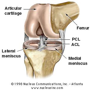 Different Knee Ligament