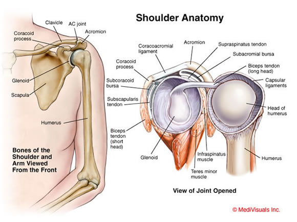 Shoulder Joint Impingement Type Syndromes - Morphopedics