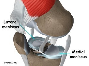Medial Meniscus and Lateral Meniscus