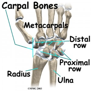 Wrist Anatomy Bones